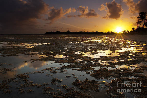 Photograph - Hawaii Sunset And Reef Reflections by Charmian Vistaunet