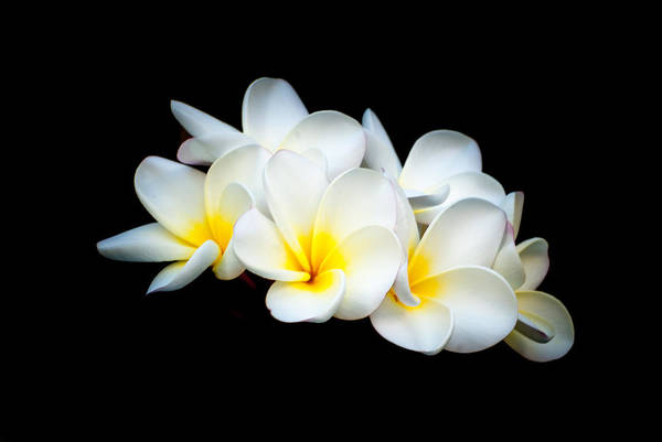 Photograph - Hawaiian Blooms by Paul Johnson