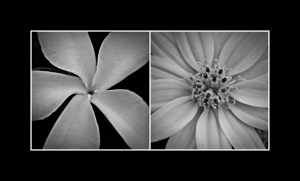 Photograph - Hawaiian Floral Diptych 1 by Patricia Strand