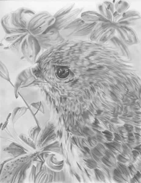 White Tiger Drawing - Hawaiian Hawk by Raquel Ventura