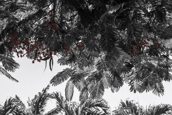 Photograph - Hawaiian Hints Of Red by Colleen Coccia