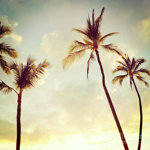 Photograph - Hawaiian Palms - Hipster Photo Square by Charmian Vistaunet