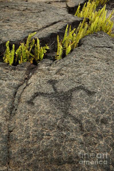 Photograph - Hawaiian Petroglyphs by Charmian Vistaunet
