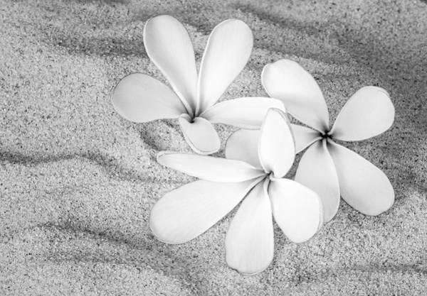 Photograph - Hawaiian Tropical Plumeria Bw by Susan Candelario
