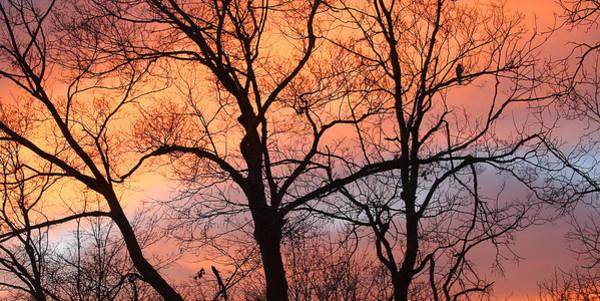 Hawk At Sunrise Art Print