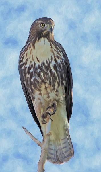 Digital Art - Hawk By Frank Lee Hawkins by Eastern Sierra Gallery