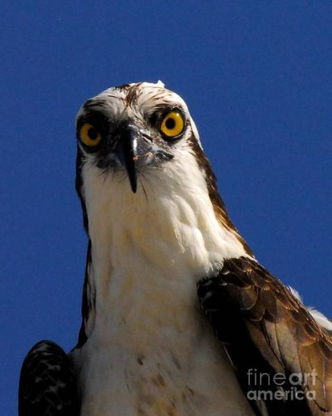 River Hawk Photograph - Hawk Eye by Quinn Sedam