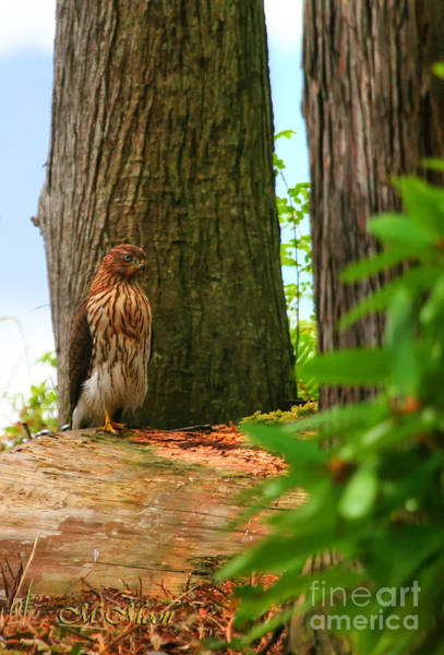 Photograph - Hawk Eyes by Tap On Photo