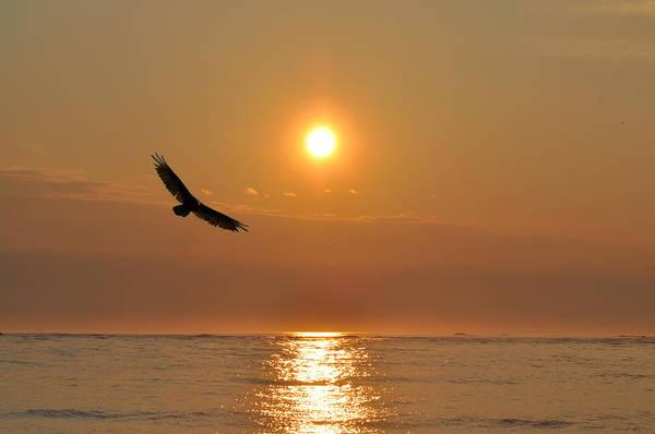 Sea Hawk Photograph - Hawk Flying At Sunrise by Bill Cannon