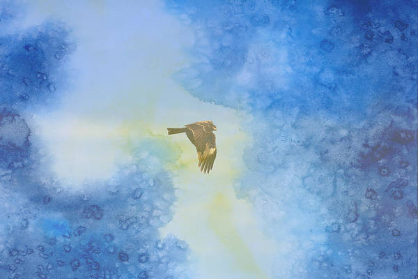 Hawk In Flight 2 Art Print