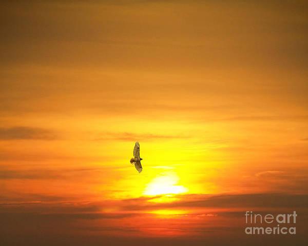Hawk Into The Sunset Art Print
