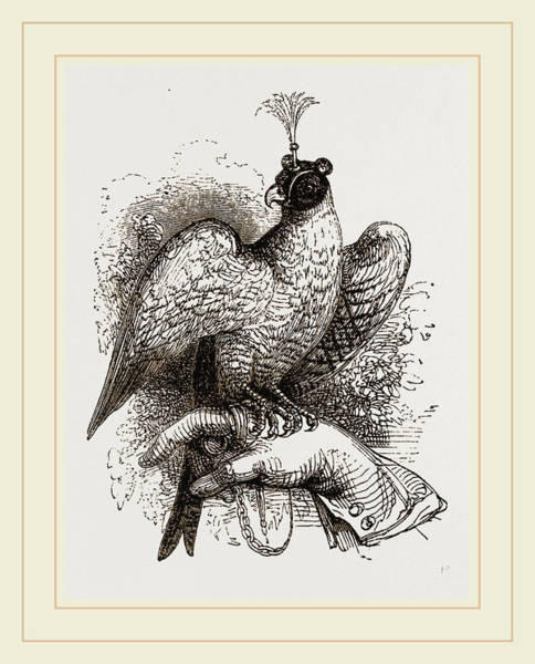 Hawk Drawing - Hawk On Fist by Litz Collection