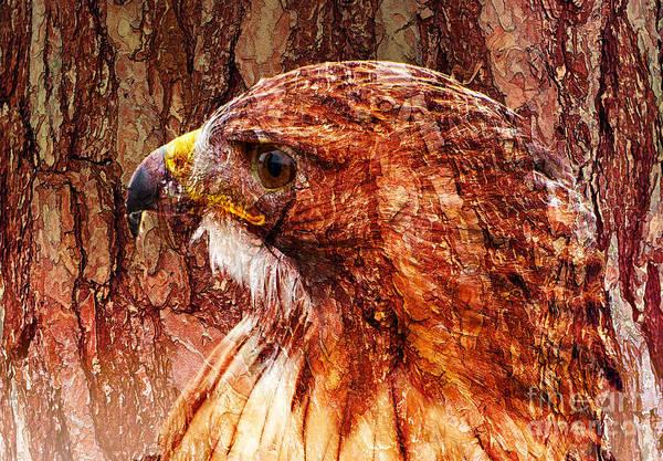 Photograph - Hawk Profile With Texture by Les Palenik
