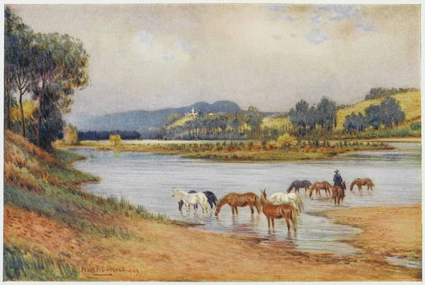 New South Wales Drawing - Hawkesbury River, New South Wales - by Mary Evans Picture Library