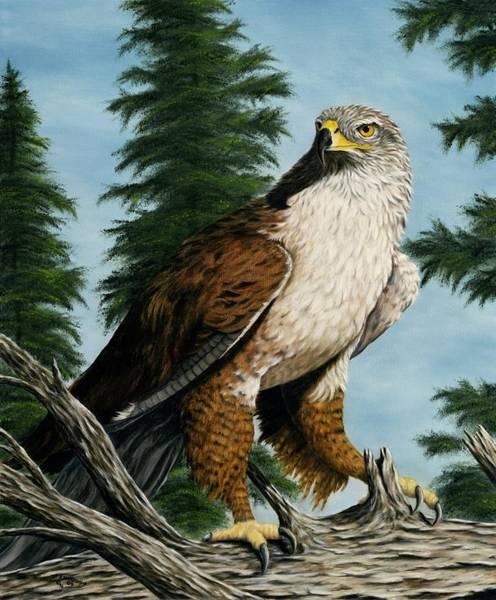 Hawk Painting - Hawkeye by Rick Bainbridge