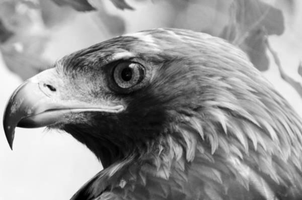 Photograph - Hawkeye by Sotiris Filippou