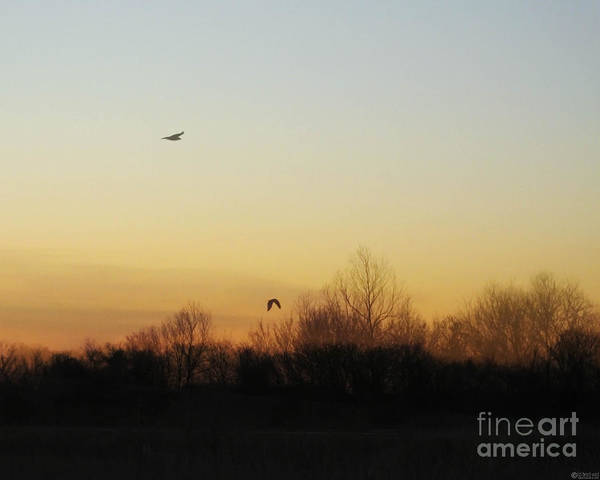 Photograph - Hawks End Of The Day Lacassine Nwr by Lizi Beard-Ward