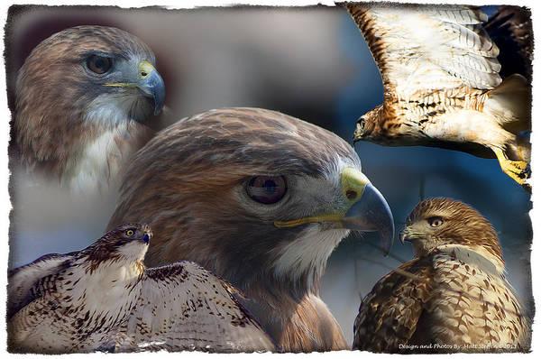 Nikon D5000 Photograph - Hawks by Matt Steffen