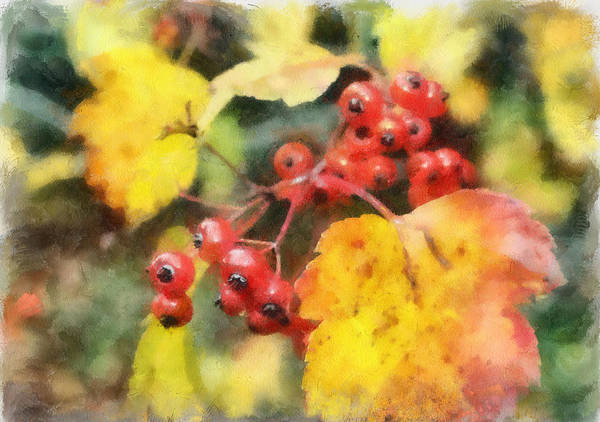 Photograph - Hawthorne Berries by Gerry Bates