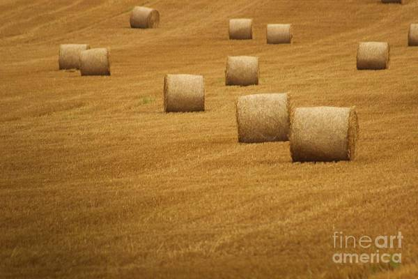 Photograph - Hay Bales by Fabrizio Malisan