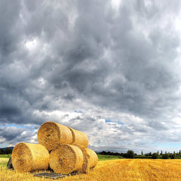 Field Photograph - Hay Bales On Stubble Field With by Antimartina