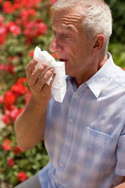 Fever Photograph - Hay Fever by Ian Hooton/science Photo Library