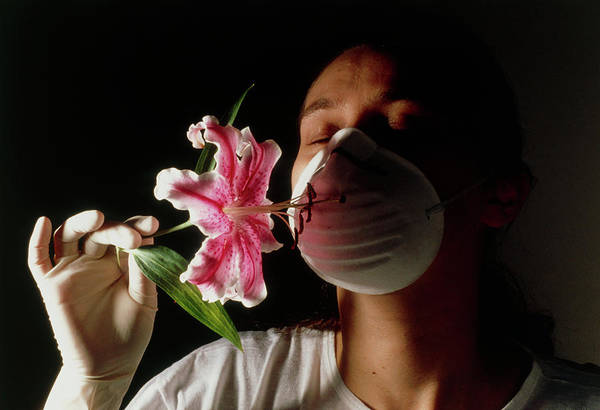Fever Photograph - Hay Fever Sufferer Sniffing A Flower Using A Mask by Klaus Guldbrandsen/science Photo Library