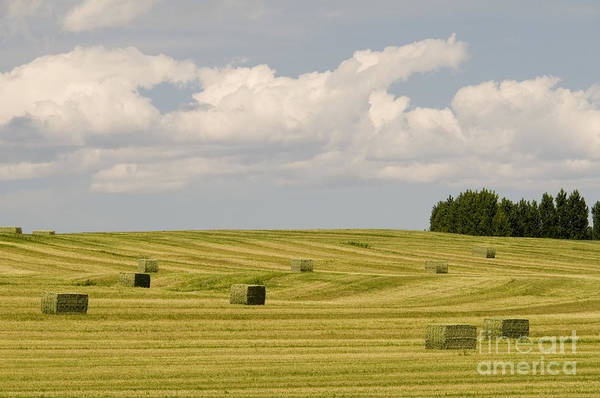 Photograph - Hay Field by William H Mullins