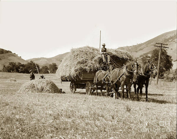 Photograph - Horse-drawn Hay Wagon Carmel Valley California Circa 1905 by California Views Archives Mr Pat Hathaway Archives