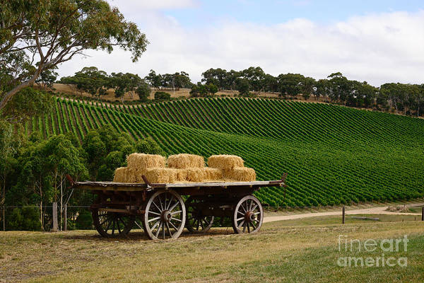 Photograph - Hay Wagon by Ray Warren
