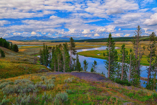 Photograph - Hayden Valley by Greg Norrell