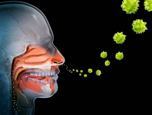 Wall Art - Photograph - Hayfever, Conceptual Image by Science Photo Library