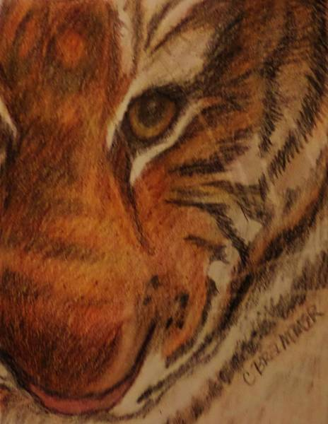 Bengal Tiger Drawing - Hayley's Zoo Tiger by Christy Saunders Church