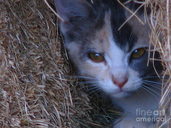 Patzer Photograph - Haystack Cat by Greg Patzer