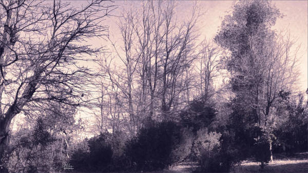 Photograph - Hazy Pink Dusk by Douglas MooreZart