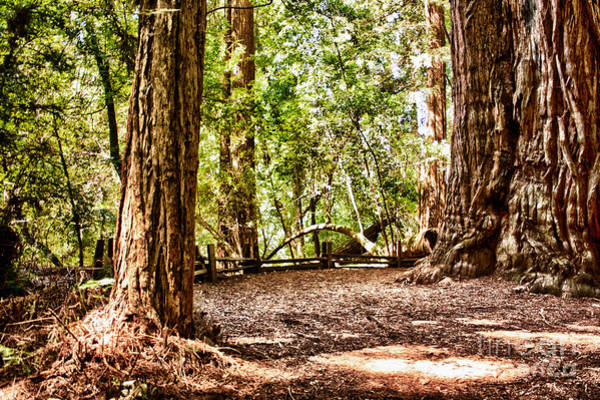 Felton Photograph - hd 379 hdr - Henry Cowell 2 by Chris Berry