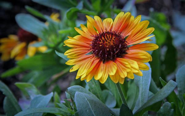 Photograph - Hdr Flower by Elaine Malott