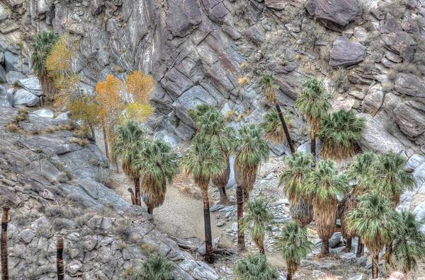 Photograph - Hdr Indian Canyons Oasis by Matthew Bamberg