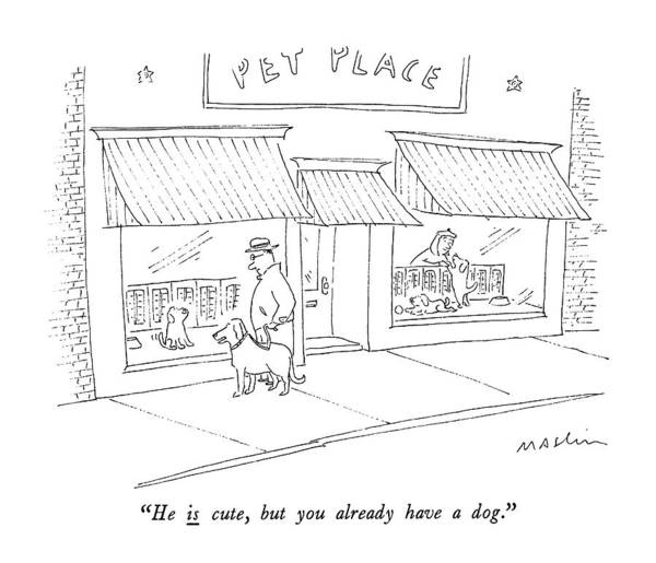Pet Store Drawing - He Is Cute, But You Already Have A Dog by Michael Maslin