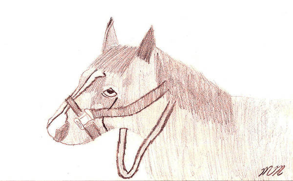 Drawing - Head Of A Horse by Marissa McAlister