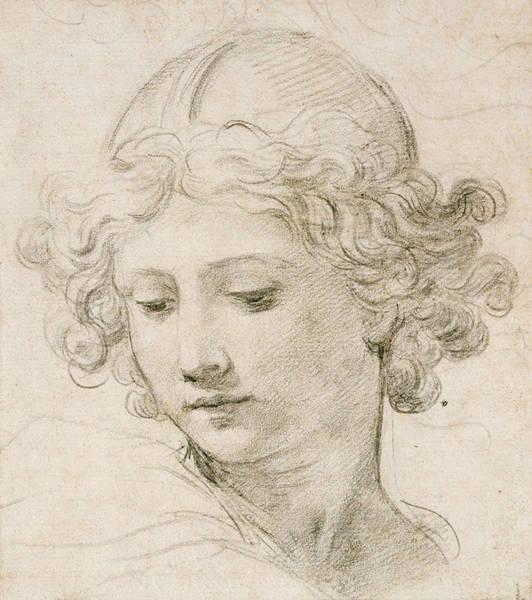 Young Drawing - Head Of An Angel by Pietro da Cortona