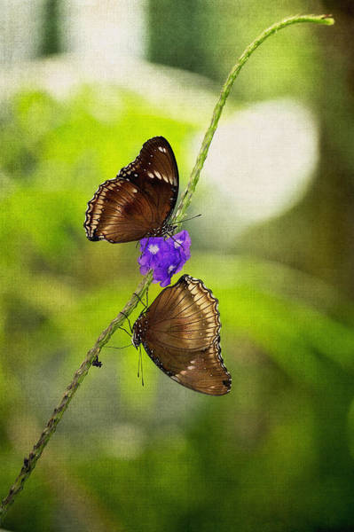 Photograph - Head Over Heels Butterfly Love by Photography  By Sai