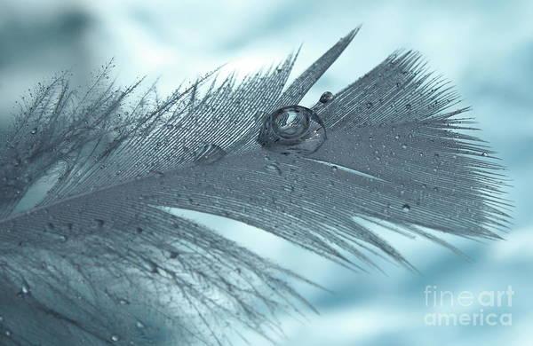White Feathers Photograph - Healing Begins by Krissy Katsimbras