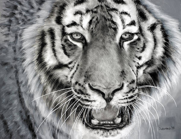 Bengal Tiger Drawing - Hear Me Roar by Alan Dubrovo