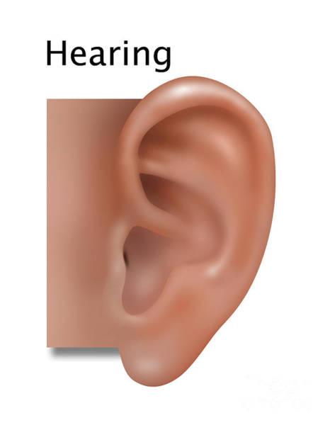 Photograph - Hearing, Illustration by Gwen Shockey