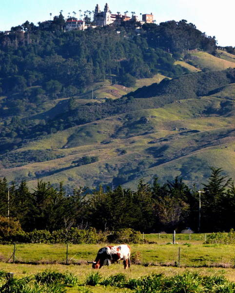 Photograph - Hearst Castle Beef by Jeff Lowe