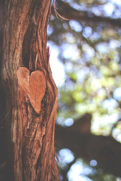 Cedar Tree Photograph - Heart In Tree by Julia Goss