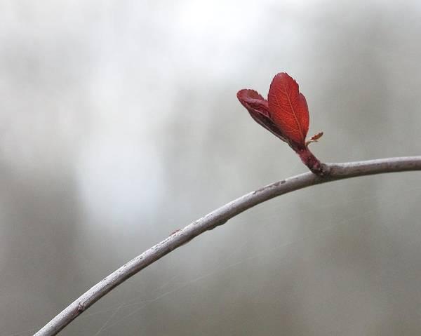 Photograph - Heart by Angela Murdock