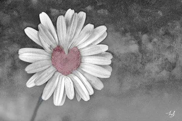 Wall Art - Photograph - Heart Of A Daisy by Linda Sannuti