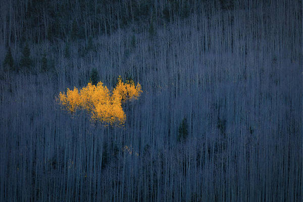 Wall Art - Photograph - Heart Of Aspens by Michael Zheng